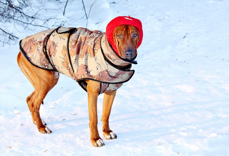 3988695-dog-for-a-walk-in-winter